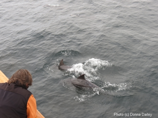 Scotland_Wildlife_Cruise_Clive_Dolphins