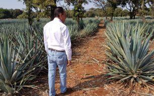 El-Tesoro-Carlos-Camarena-in-his-agave-fields